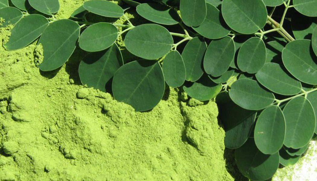 Moringa: un nuevo súper ingrediente para la cosmética