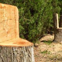 Larga vida a los troncos que se secan en los jardines
