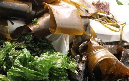 tendencias gastronomicas algas