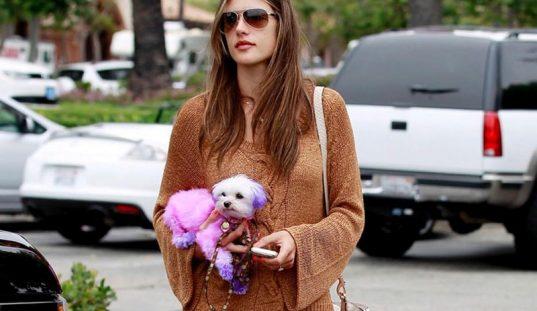 moda canina perros famosas